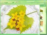 Новый Диск   Цветочный дизайн : Икебана [2008] [EXE]
