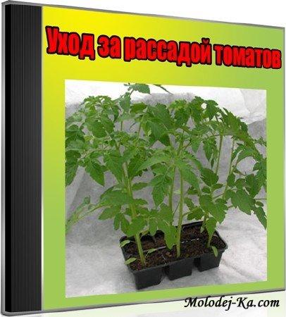 Уход за рассадой томатов (2013) DVDRip